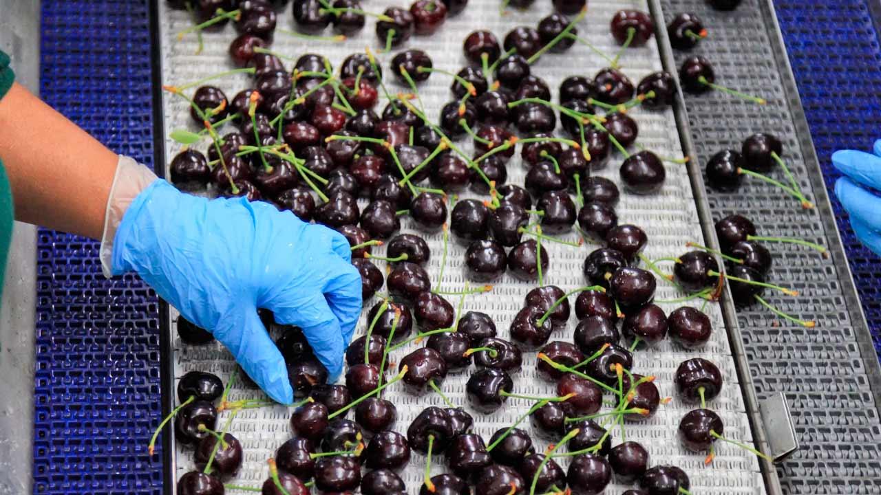 Exportadores de Cerezos