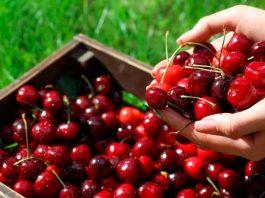 España elevó un 150 % la exportación de cereza y un 132 % la de arándano en junio